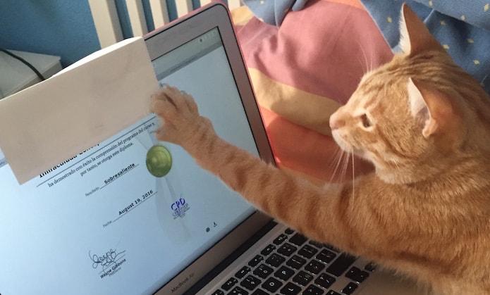 Realiza un curso online gratis y consigue un diploma desde casa
